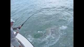 Акулы оставили рыбака без улова