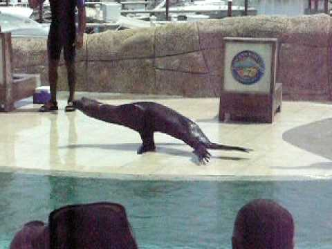 Jennifer Lopez dancing seal breakdance funny hilarious