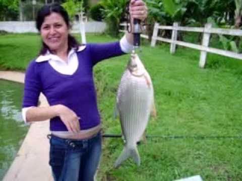 Pescaria Hotel Fazenda M1 - Aguas de Lindoia.asf