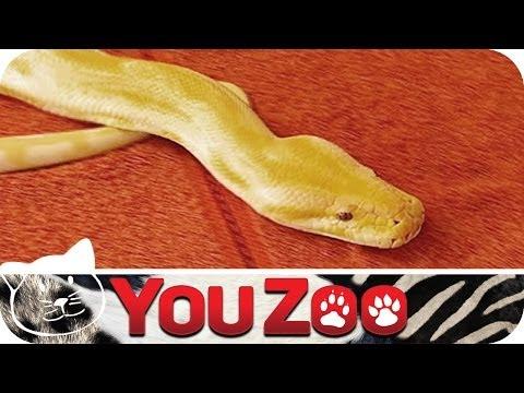 Haustier - Tiertrainerin Nicole hilft heute einer Frau mit den Schlangen ihres Freundes zurecht zu kommen. Mehr YouZoo im ABO: http://bit.ly/YouZooAbo Tierisch gut -- Y...