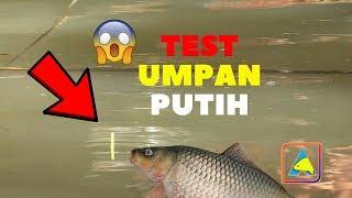 Video TES UMPAN PUTIH.. Mancing Ikan Mas Harian #carp fishing MP3, 3GP, MP4, WEBM, AVI, FLV April 2019