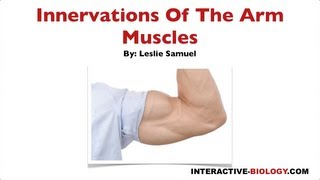 097 Innervations Of The Arm Muscles