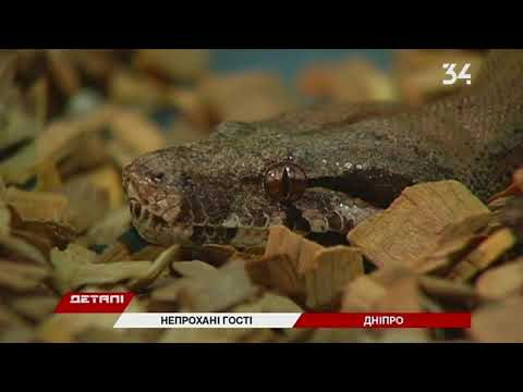 Змеи активизировались: как избежать укусов