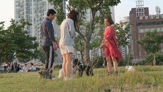 Han River is so pretty, but there are too many dogs.LAST VLOG: https://youtu.be/HE5ywKQ-nGQ?list=PLjlkxMHp1pQHOU-XFO3uW3offGOLxSc_aSUBSCRIBE & Press the Bell! http://bit.ly/KpopSteveSo I'm going to Korea for a month, and I'm going to vlog it all! This is going to be a journey, and you're here with me.Today we ate some delicious food, went to Han River and then to a multi-bang. Living the teenage life in Korea.DISCLAIMER: I do not own any of the music used in this video. All rights go to their respective owners. The music in this video is used for entertainment purposes only.Hey guys it's KpopSteve - 케이팝스티브 here, making videos about kpop, k-culture and myself. Join the chaos by subscribing, you will probably regret it.Twitter - https://twitter.com/kpopsteve Instagram - https://instagram.com/kpopsteve/ Facebook - https://www.facebook.com/kpopsteveuk Facebook Group - https://www.facebook.com/groups/kpopsteve Twitch - https://www.twitch.tv/kpopsteveSnapchat - kpopsteve