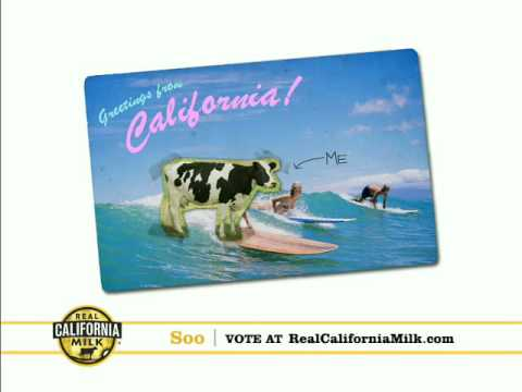 Real California Milk Happy Cow Audition - Soo
