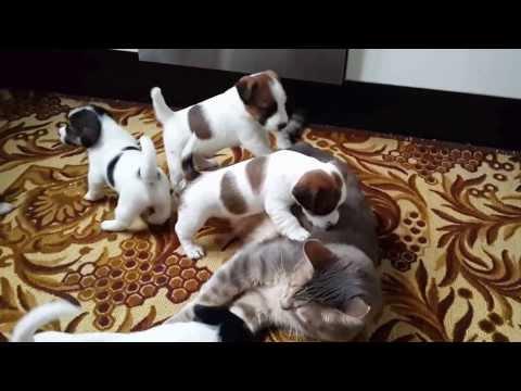 mamma gatta per dei cagnolini