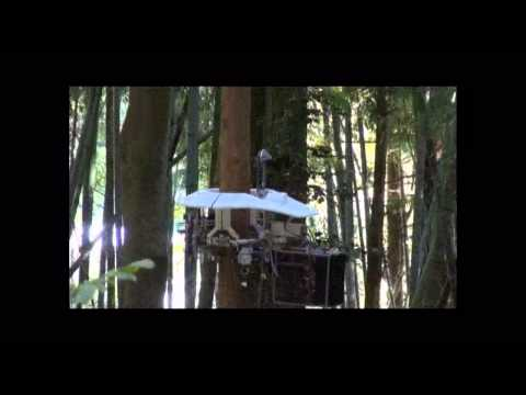 A Chainsaw-Wielding Tree-Climbing Bot Is Actually A Safer Way To Prune