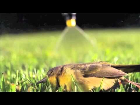 CedarCide Outdoor Pesticide Children and Pet Safe Outdoor Insect Control from CedarSiders
