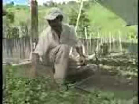 Reportagem Minas Rural