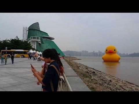 Video 黃色小鴨訪澳!   Yellow little duck has come to Macau! download in MP3, 3GP, MP4, WEBM, AVI, FLV January 2017