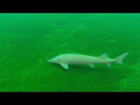 Grüblsee, Oostenrijks duikersparadijs