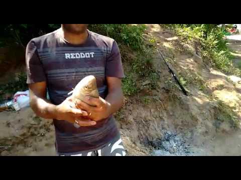 Pescaria em jumirim só curimbao