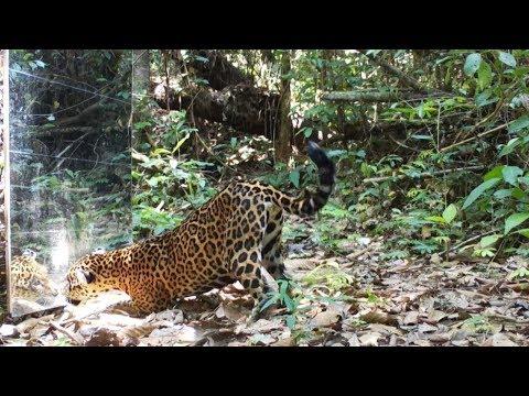 Фотограф установил зеркало в тропическом лесу