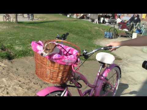 Evie's bike basket from Cynthia's Twigs