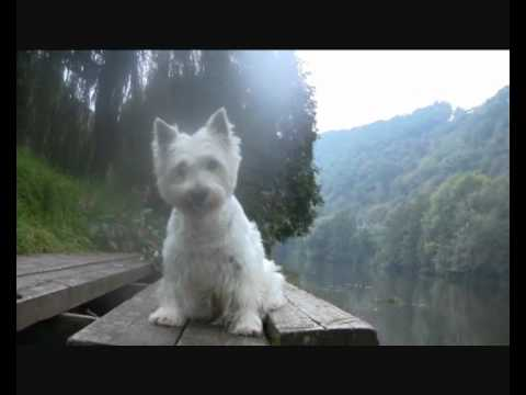 Dog Tricks:  Réglisse the Westie