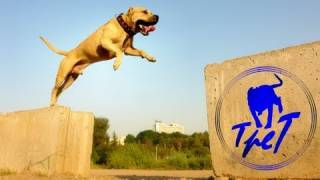 This Parkour Dog From Ukraine Will Make You Smile