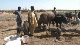 Pakistan Floods one year on