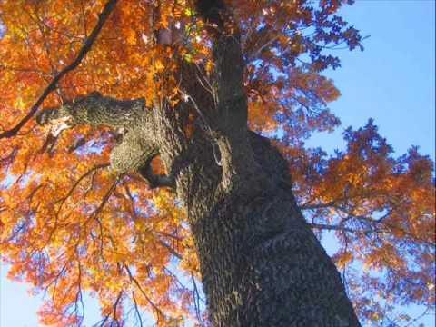 Tekst piosenki Jo Stafford - Autumn Leaves po polsku