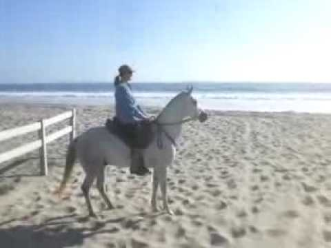 Horse Ride to the Beach