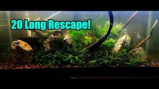 Brand New Planted Aquascape! by Rachel O'Leary