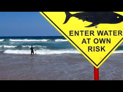 Surfer an australischer Westküste von Haien angegriff ...