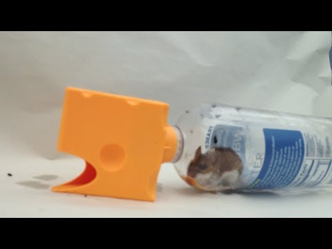 360 jpeg 43kb new how to keep mice out of your house or apartment for
