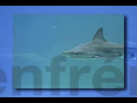 Tiburones testimoniales