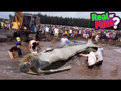 Video क्या जलपरियां सच में होती है ? Proof of Mermaid's Existence - Real or Fake download in MP3, 3GP, MP4, WEBM, AVI, FLV January 2017