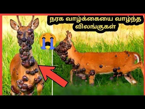 நரக வாழ்க்கையை வாழ்ந்த விலங்குகள் | Nine Amazing Survived Animals | Story Bytes Tamil