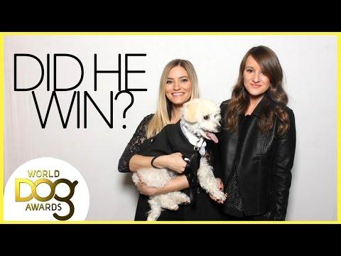 DOG AWARDS!!!!