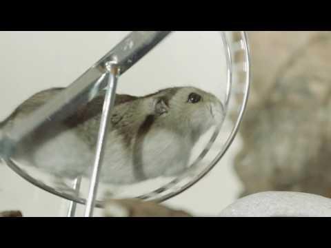 Campaña contra el abandono de los animales. Hamster