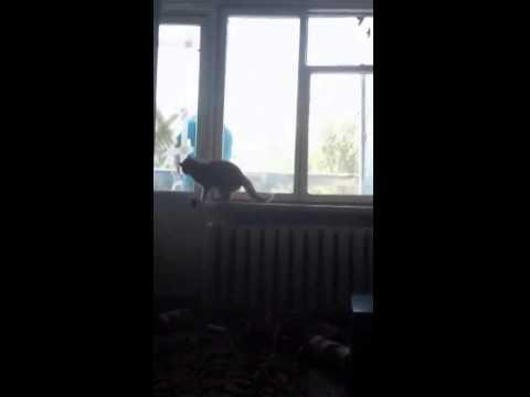 Пацан довел кота до истерики СМОТРЕТЬ ДО КОНЦА - DomaVideo.Ru