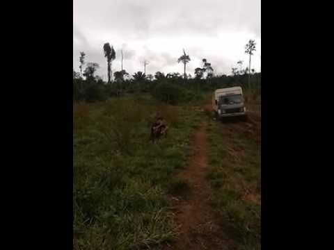 Caminhões boiadeiro, Toca do sapo Xingu