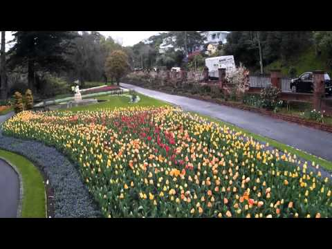 Wellington Drone Video