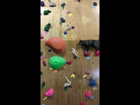 Cat Skillfully Maneuvers Climbing Wall