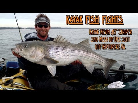 46 Inch Striped Bass - kayak fishing, kayak photos, kayak videos