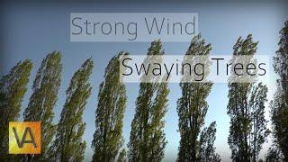 Ветер раскачивает деревья - шум, чтобы быстро заснуть