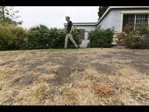drought - As California's severe drought deepens and officials look to reduce water consumption in every possible way, the state appears to be sending mixed signals as to which water-related activity...