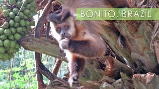 Bonito Brazil  city pictures gallery : Bonito, Mother Nature's Playground - Travel Deeper Brazil (Ep. 11)