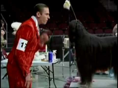 Miller High Life Lite - Dog Show