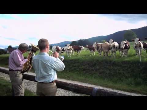 0 French Cows Love American Jazz