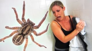 EXTREME SPIDER SCARE