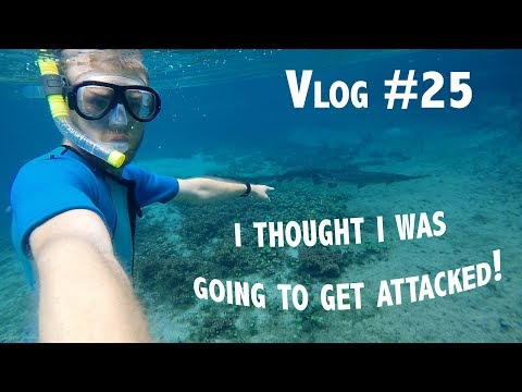Vlog#25 I thought I was going to get attacked! ~Ichetucknee springs