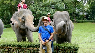 Nonton Fun With Elephants At Thai Elephant Kingdom Film Subtitle Indonesia Streaming Movie Download