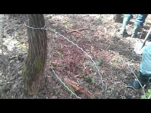как правильно ставить петли на лося ловить за ногу видео