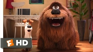 The Secret Life of Pets - The Owners Return Scene (10/10) | Movieclips full download video download mp3 download music download
