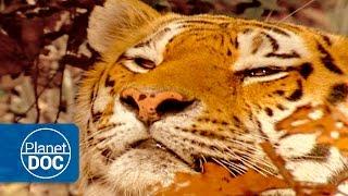 Nonton Last Refuges   The Tiger War Film Subtitle Indonesia Streaming Movie Download