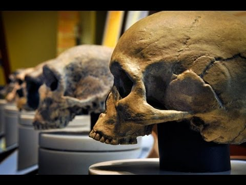 Humans vs. Neanderthals - Who Would Win? Archaeologists Weigh In