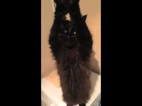 21576 - ¿Con cuál de estos gatitos saldrías esta noche?
