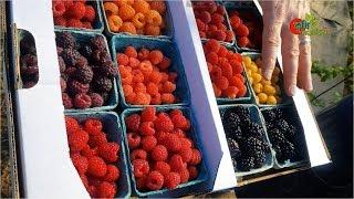 Raspberry -রাস্পবেরি : the...